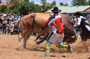 jindy rodeo2012003