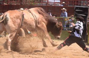 jindy rodeo2012004