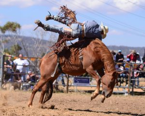 jindy rodeo2012006