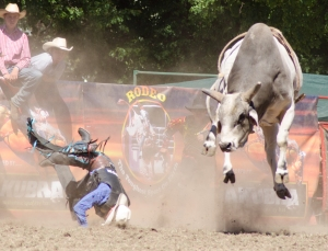 Tumbi rodeo-3