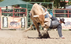 Tumbi rodeo-6