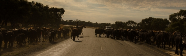 Droving on the Long Paddock