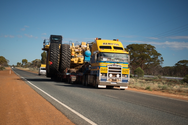 One of the many hazards of driving on the Goldfields ...