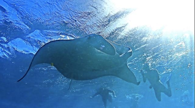 bigfish-4
