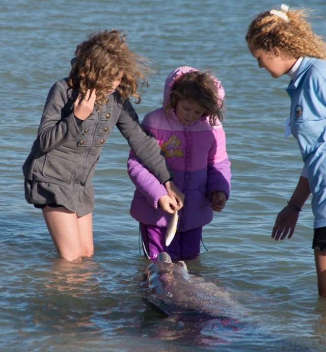 2 lucky kids get to feed a dolphin