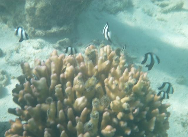 smallfish-3