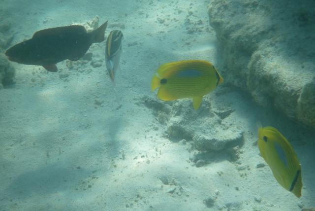 smallfish-6