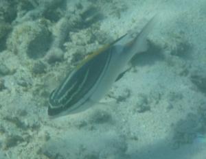 smallfish-7