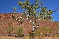 Colours of the Kimberley - Red , blue ,white,and green