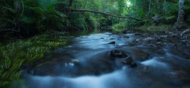 Rainforest creek, Cape Tribulation