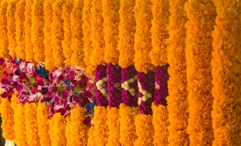 Flores Raras 30291160 further 1382913 furthermore Arreglo Floral Para Caballeros Con Anturios Dulces in addition 420 furthermore 248. on dendrobium 24