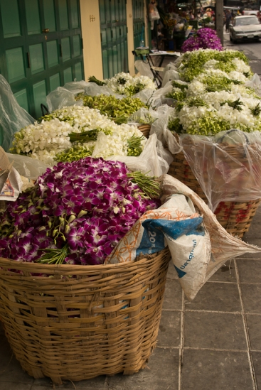 orchids by the basket load