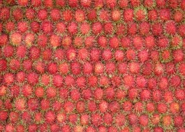 table load of rambutans