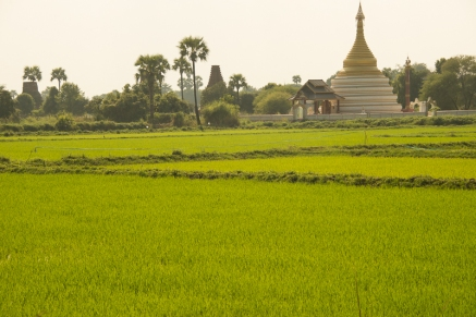 Chedi in the rice paddies, Inwa