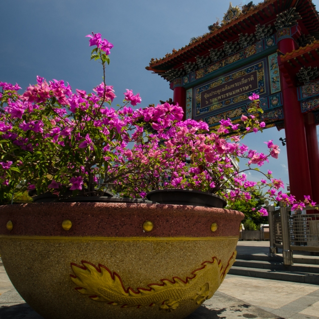 Bougainvillea, Chinatown gate