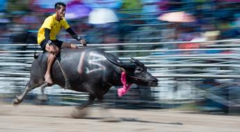 buffalo_racing-1