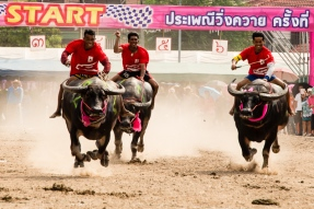 buffalo_racing-13