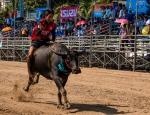 buffalo_racing-2