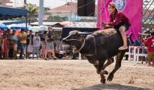 buffalo_racing-3