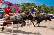 buffalo_racing-4