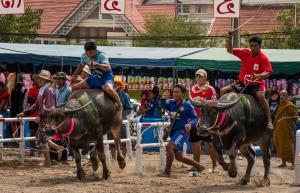 buffalo_racing-5
