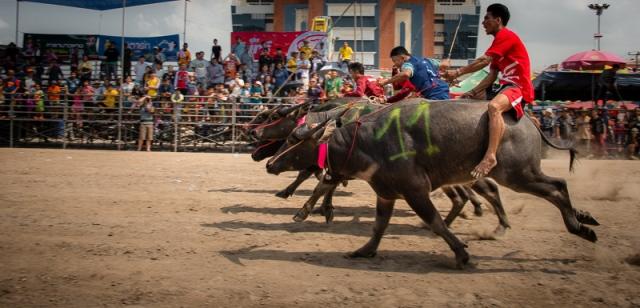 buffalo_racing-6