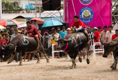 buffalo_racing-7