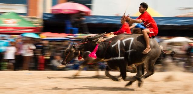 buffalo_racing-8