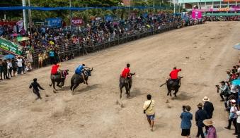 buffalo_racing-9