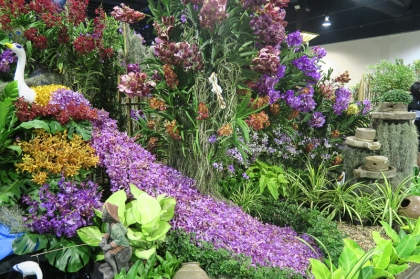 orchid show-11