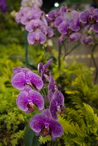 orchid show-13