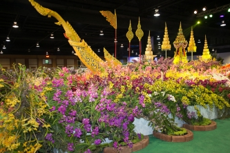 orchid show-14