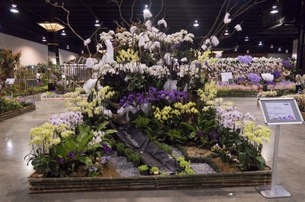 orchid show-6