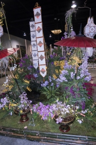 orchid show-7
