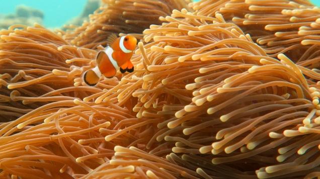 No, I'm not Nemo !