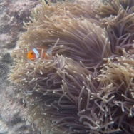 no, I'm not Nemo either