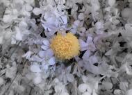 floral_display-10