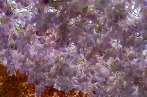 floral_display-3