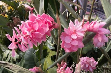 floral_display-5