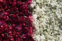 floral_display-6