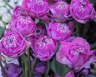 floral_display-8