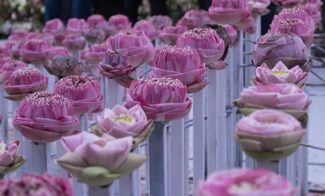 floral_display-9