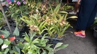 orchids...