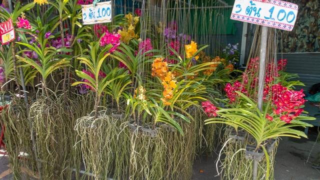 plant market-2