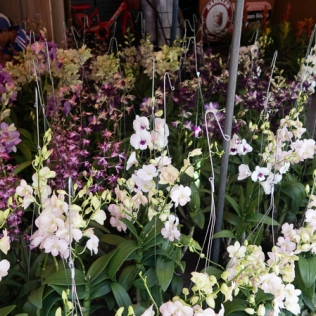 more orchids...
