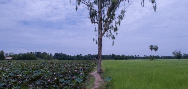 Lotus_field (8 of 9)